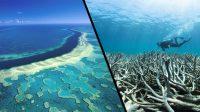 Australia's barrier reef is in poor condition