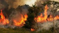 Amazon fire rapidly hits many parts