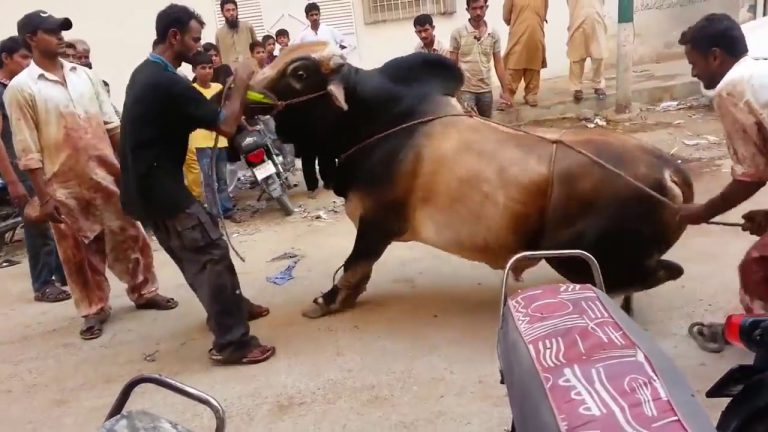 Eid-ul-Adha: second day being celebrated with festivity