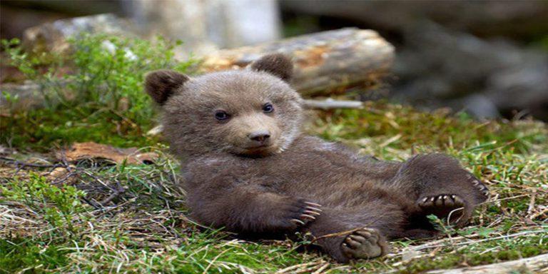 Bear cub escapes from Peshawar Zoo