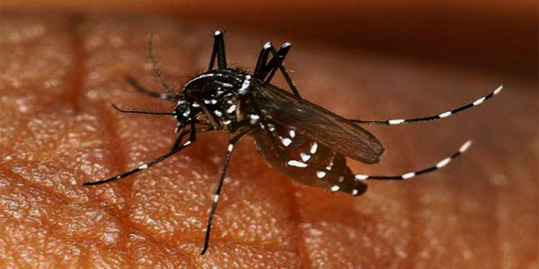 Dengue Virus on rise in many cities