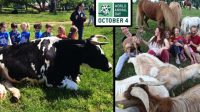 World Animal Day is celebrated on October 04